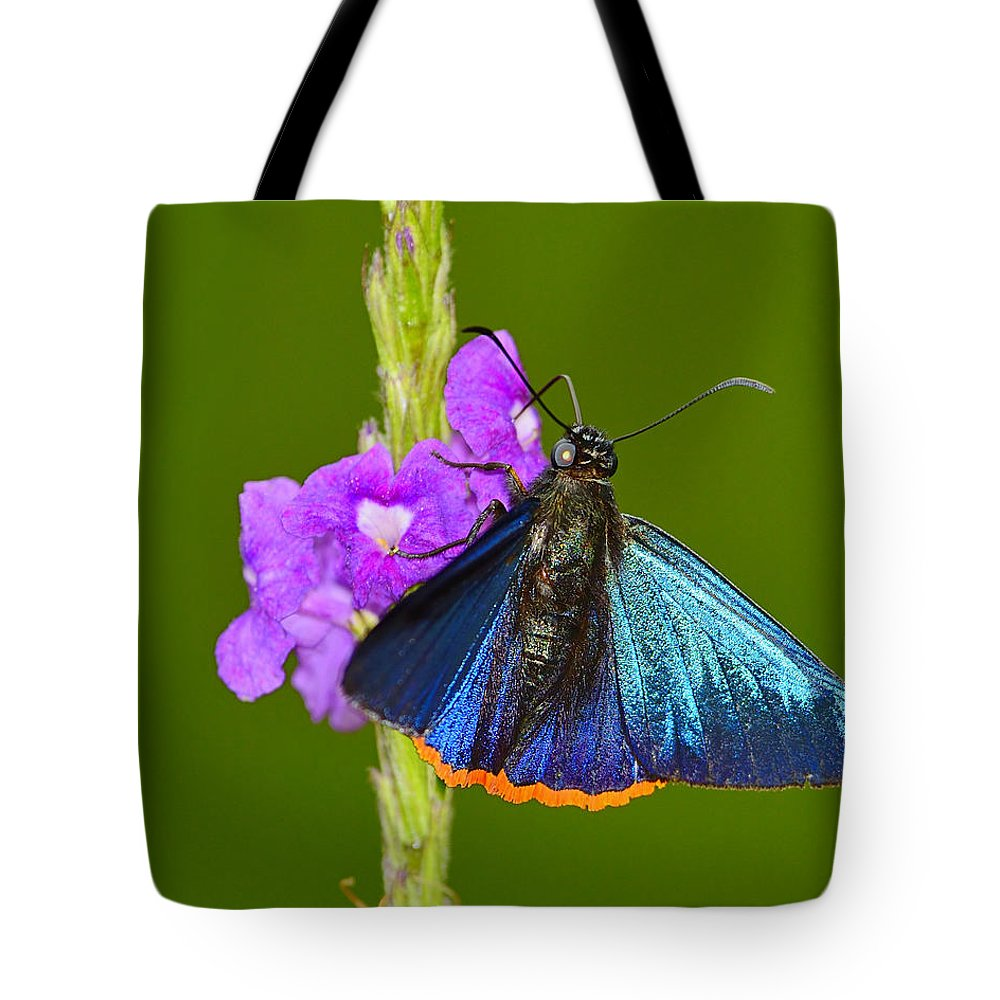 Chalypyge Chalybea Tote Bag featuring the photograph Orange-rimmed Firetip by Tony Beck