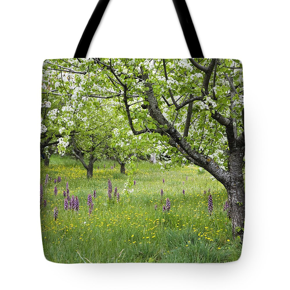 Mp Tote Bag featuring the photograph Orchard With Flowering Orchids by Konrad Wothe