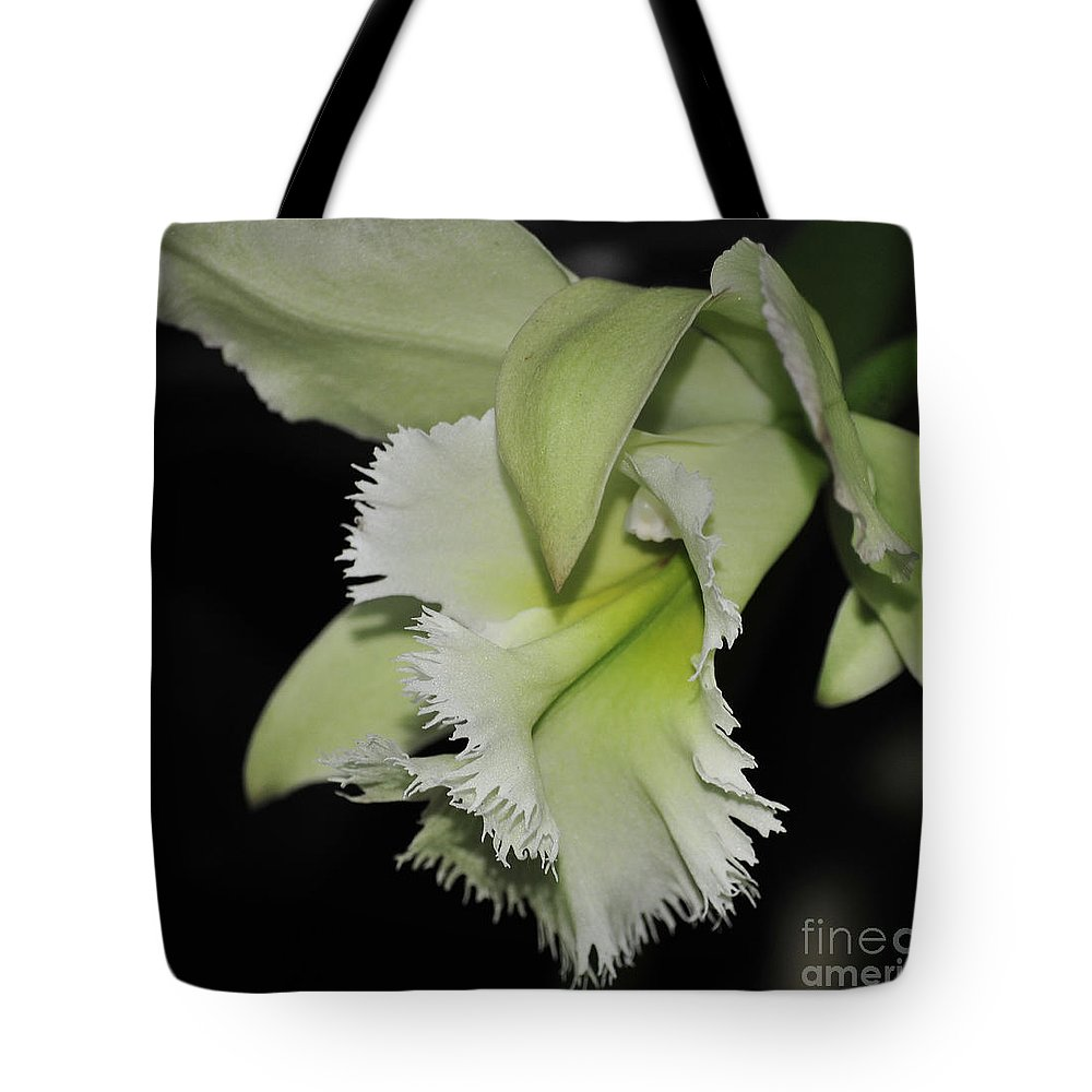 Orchid Tote Bag featuring the photograph orchid 900 Brassolaeliocattleya Ruben's Verde Chantilly Green by Terri Winkler