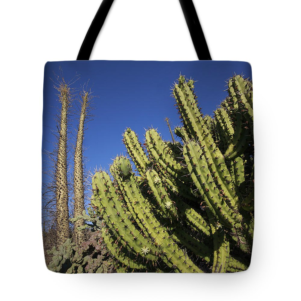 Mp Tote Bag featuring the photograph Organ Pipe Cactus Stenocereus Thurberi by Cyril Ruoso