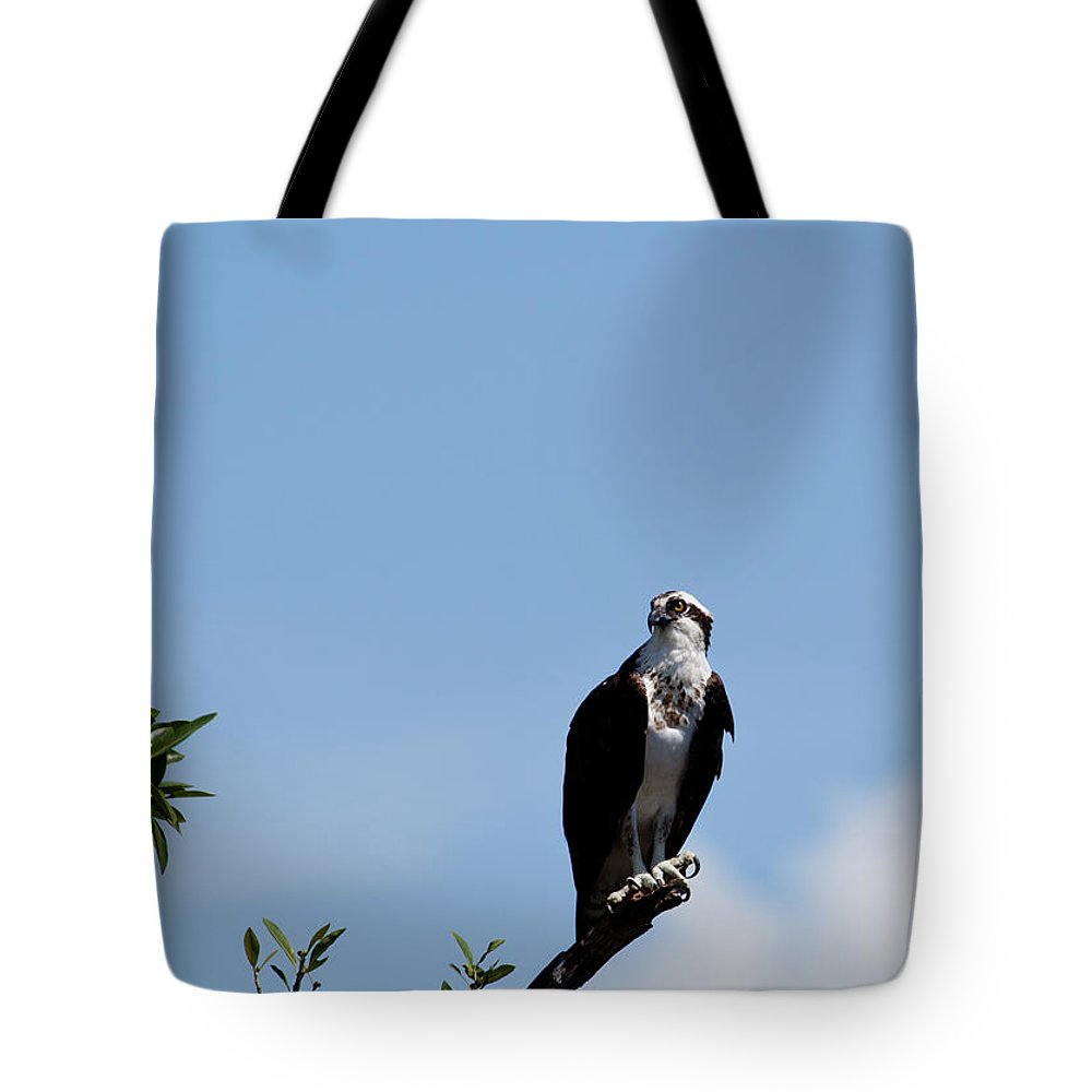 Osprey Tote Bag featuring the photograph Osprey by Michelle Constantine
