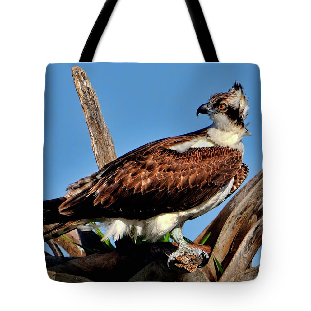 Osprey Tote Bag featuring the photograph Osprey On A Windy Morning by Bill Dodsworth
