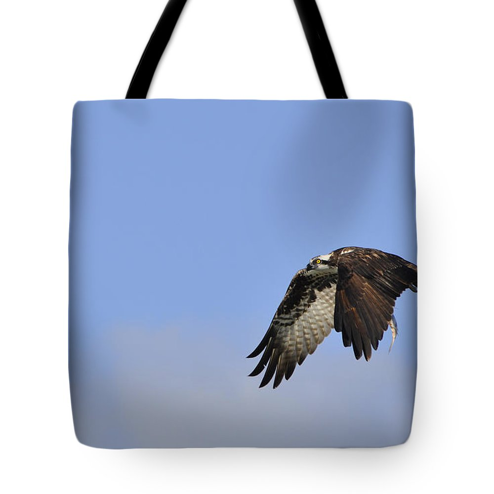 Osprey Tote Bag featuring the photograph Osprey On The Move by Christine Stonebridge
