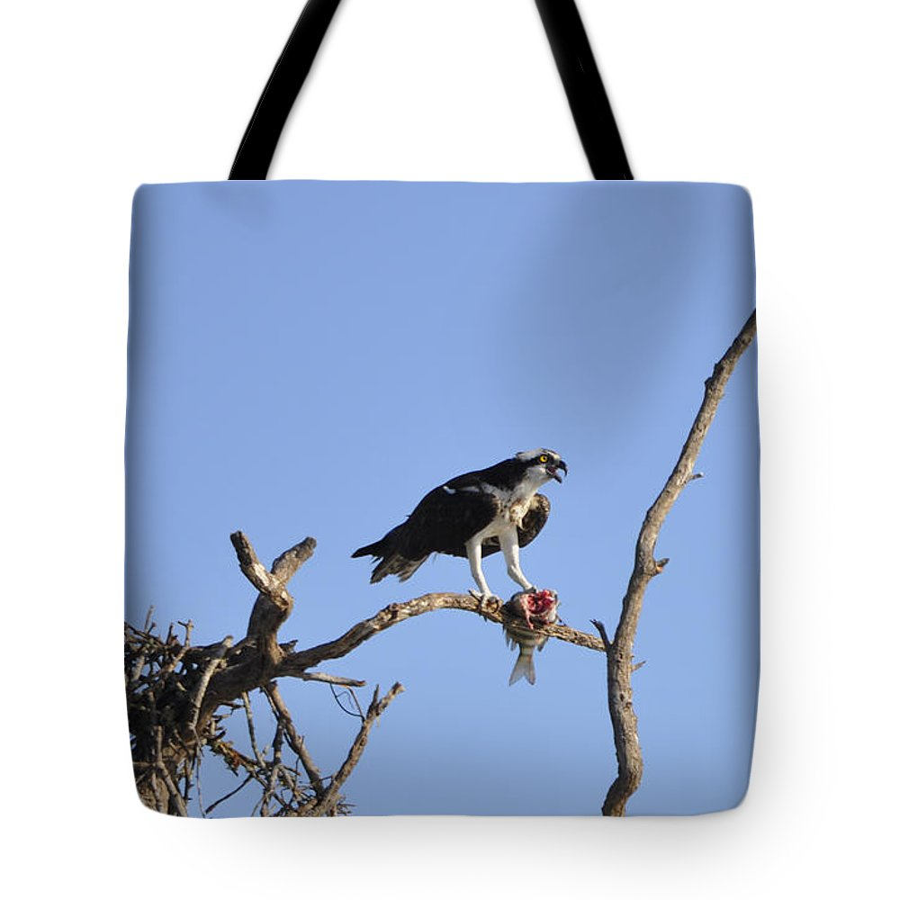 Osprey Tote Bag featuring the photograph Osprey With Catch I by Christine Stonebridge
