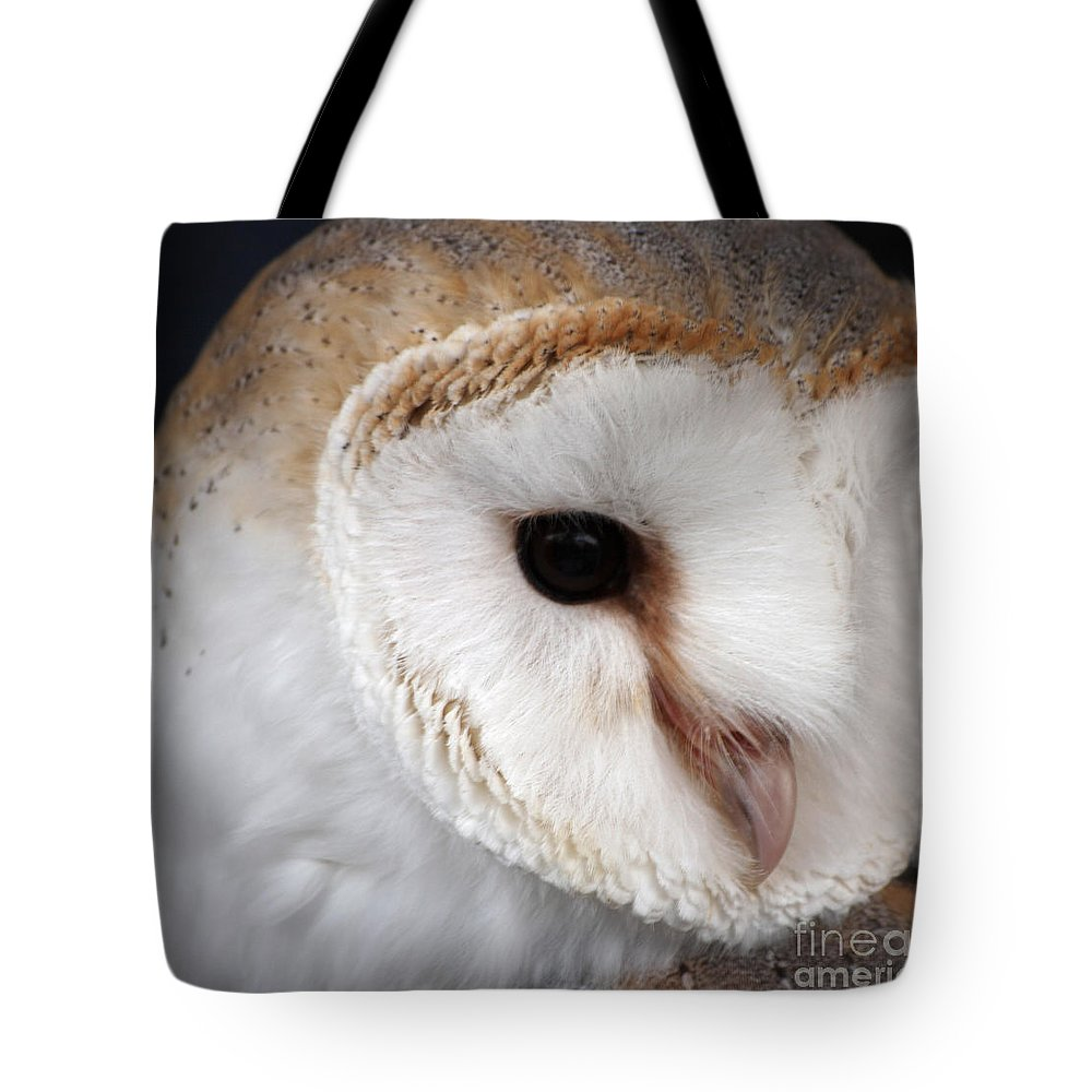 Owl Tote Bag featuring the photograph owl by Milena Boeva