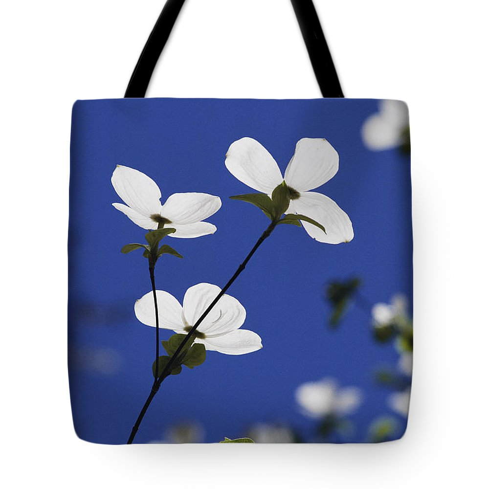 Yosemite National Park Tote Bag featuring the photograph Pacific Dogwood Blossoms Cornus by Marc Moritsch