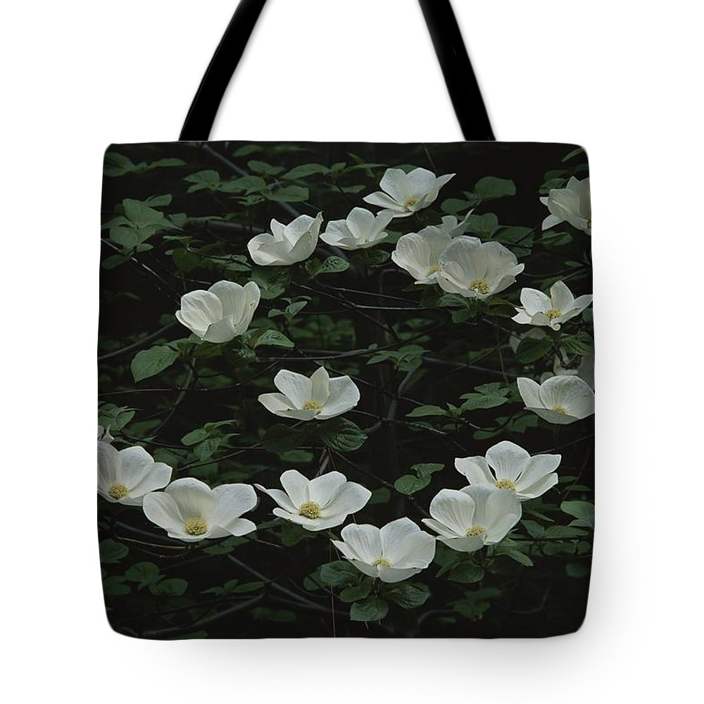 North America Tote Bag featuring the photograph Pacific Dogwood Blossoms by Marc Moritsch