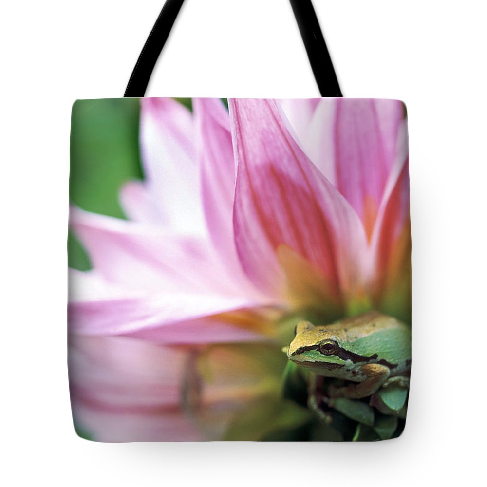 Bright Tote Bag featuring the photograph Pacific Tree Frog In A Dahlia Flower by David Nunuk