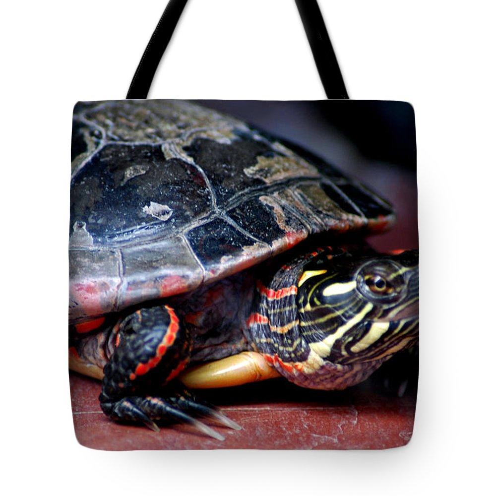Usa Tote Bag featuring the photograph Painted Turtle Michigan by LeeAnn McLaneGoetz McLaneGoetzStudioLLCcom