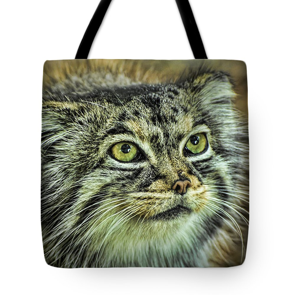 Pallas Cat Tote Bag featuring the photograph Pallas Cat by Heather Applegate
