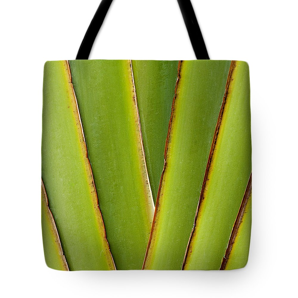 Bronstein Tote Bag featuring the photograph Palm Frond Detail by Sandra Bronstein