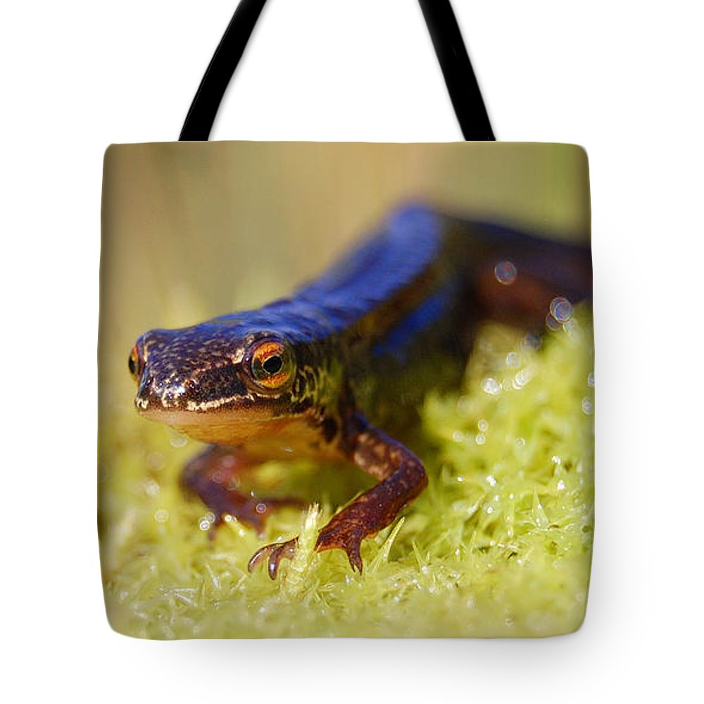 Palmate Newt Tote Bag featuring the photograph Palmate Newt by Gavin Macrae