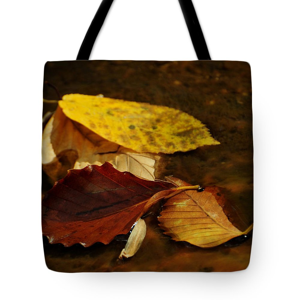 Leaves Tote Bag featuring the photograph Panning For Gold by Rebecca Sherman