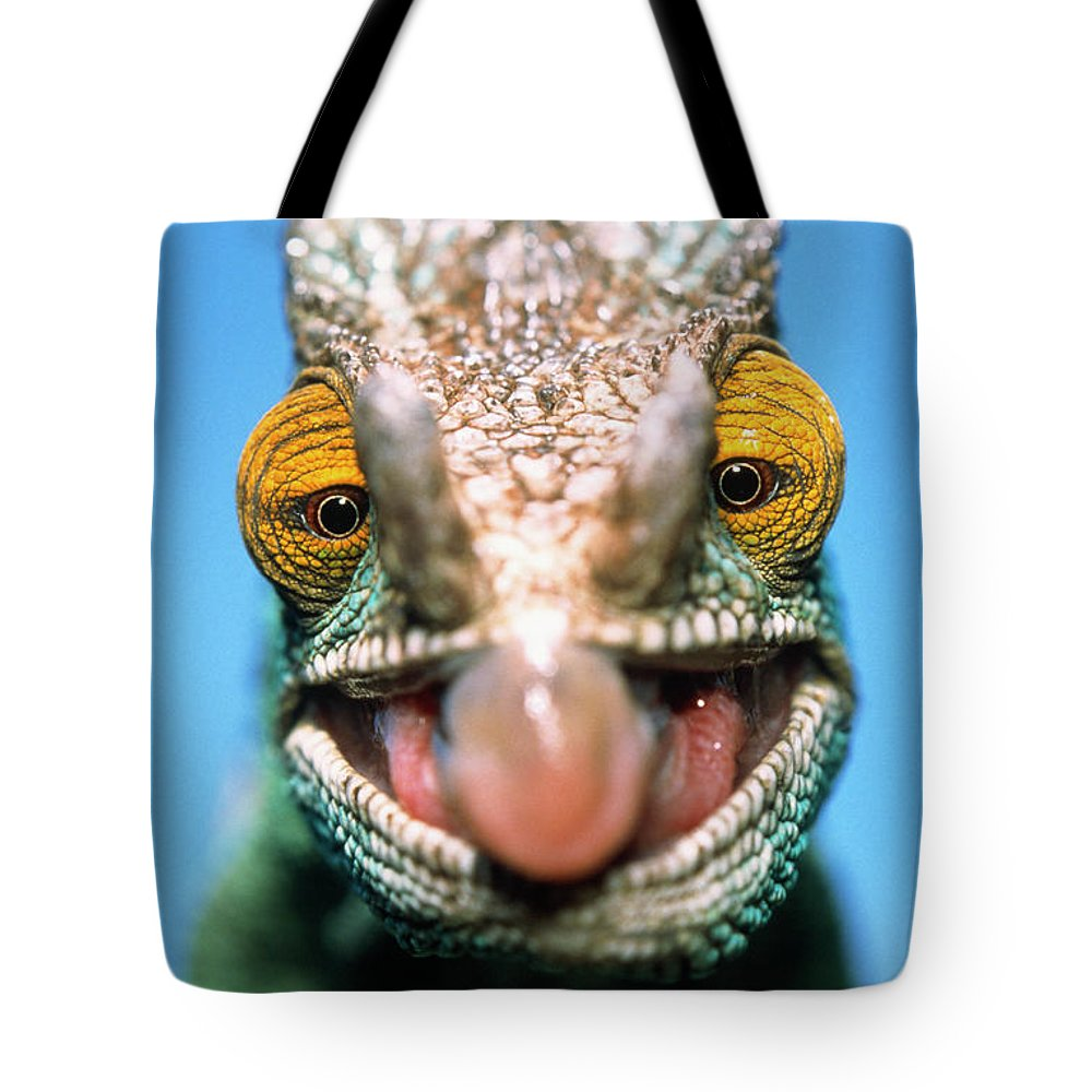 Fn Tote Bag featuring the photograph Parsons Chameleon Calumma Parsonii by Ingo Arndt