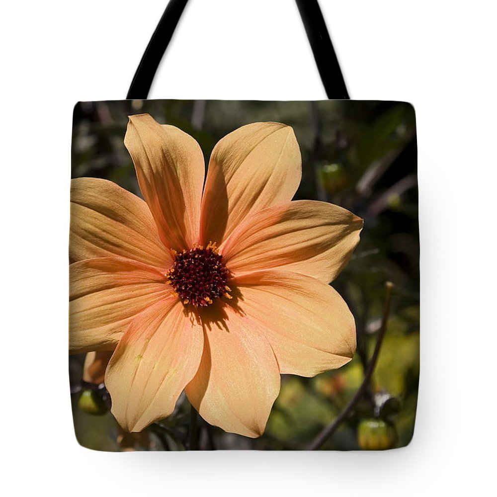 Peach Flower Tote Bag featuring the photograph Peach Flower by Sally Weigand