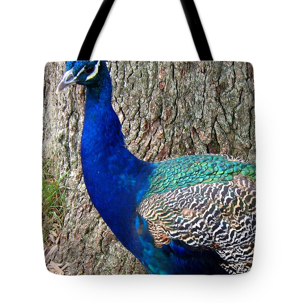 Peacock Tote Bag featuring the photograph Peacock by Denise Keegan Frawley