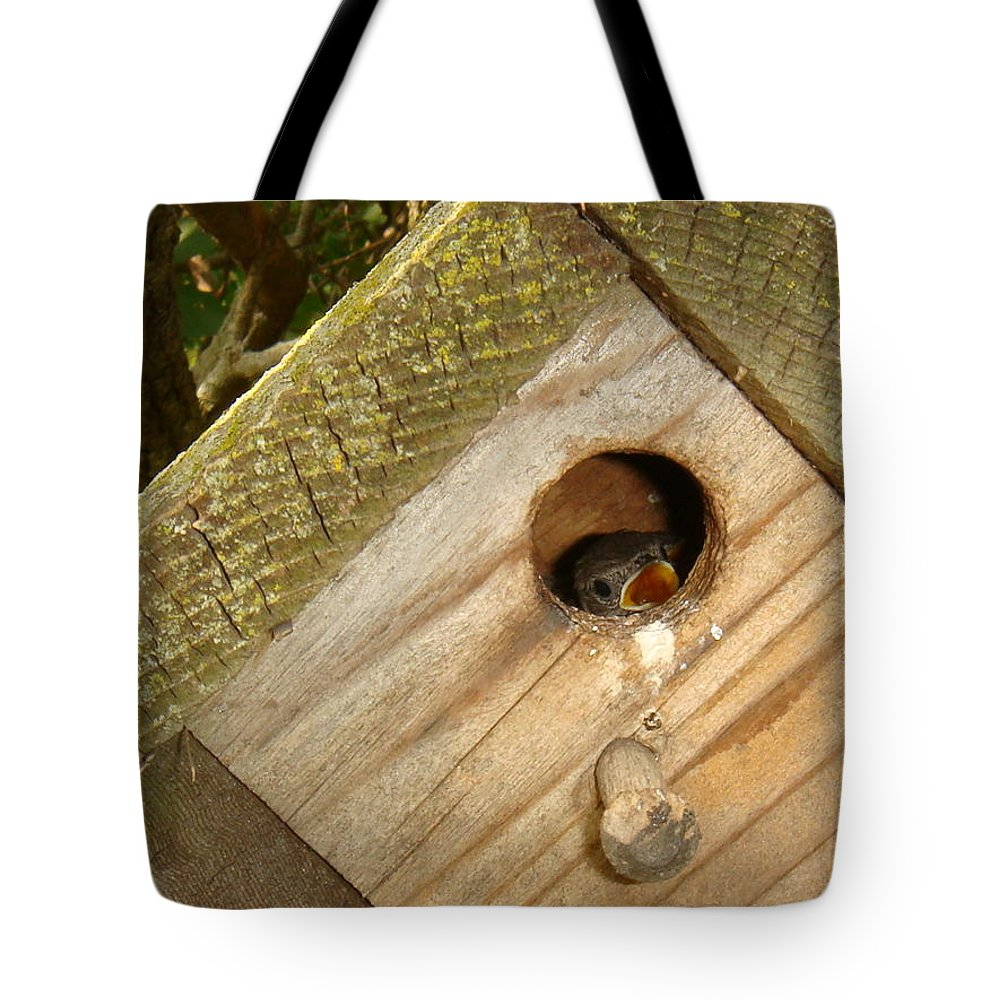 Bird Tote Bag featuring the photograph Peak A Boo by Bonfire Photography