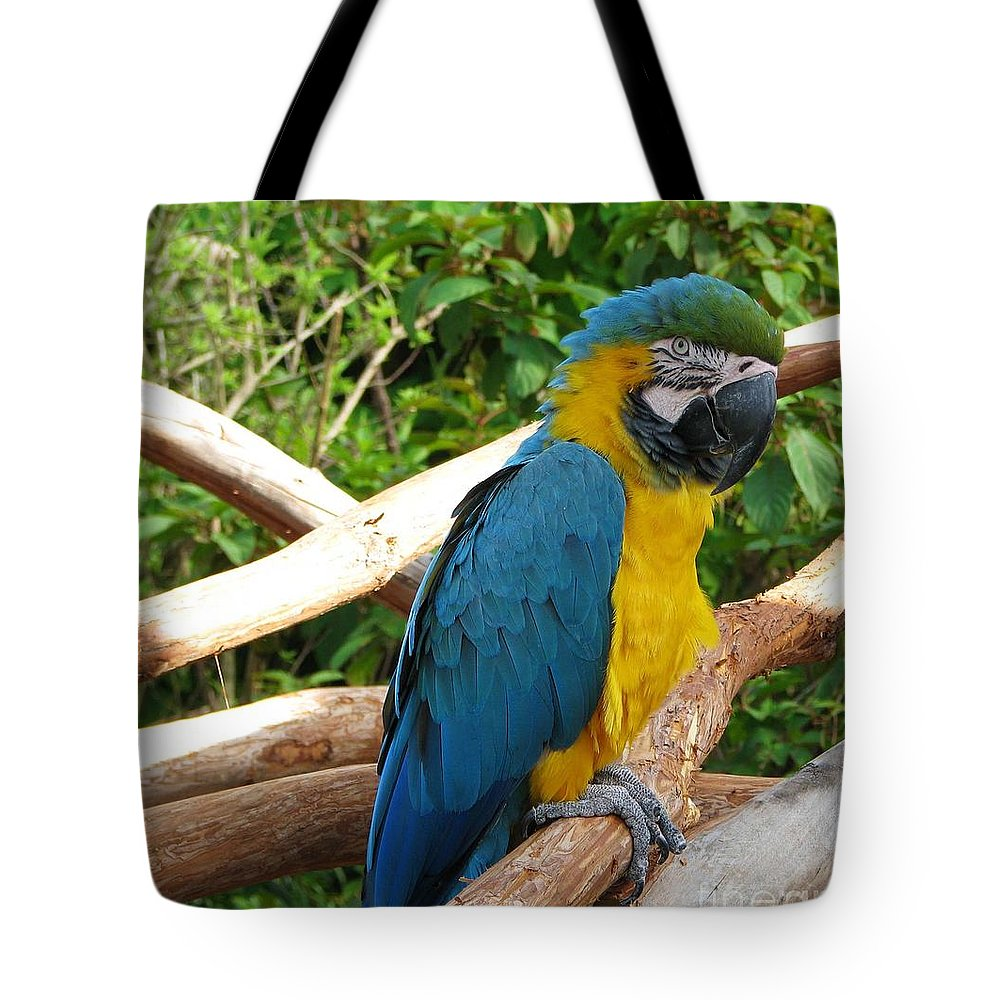 Birds Tote Bag featuring the photograph Pedro by Patricia Blake
