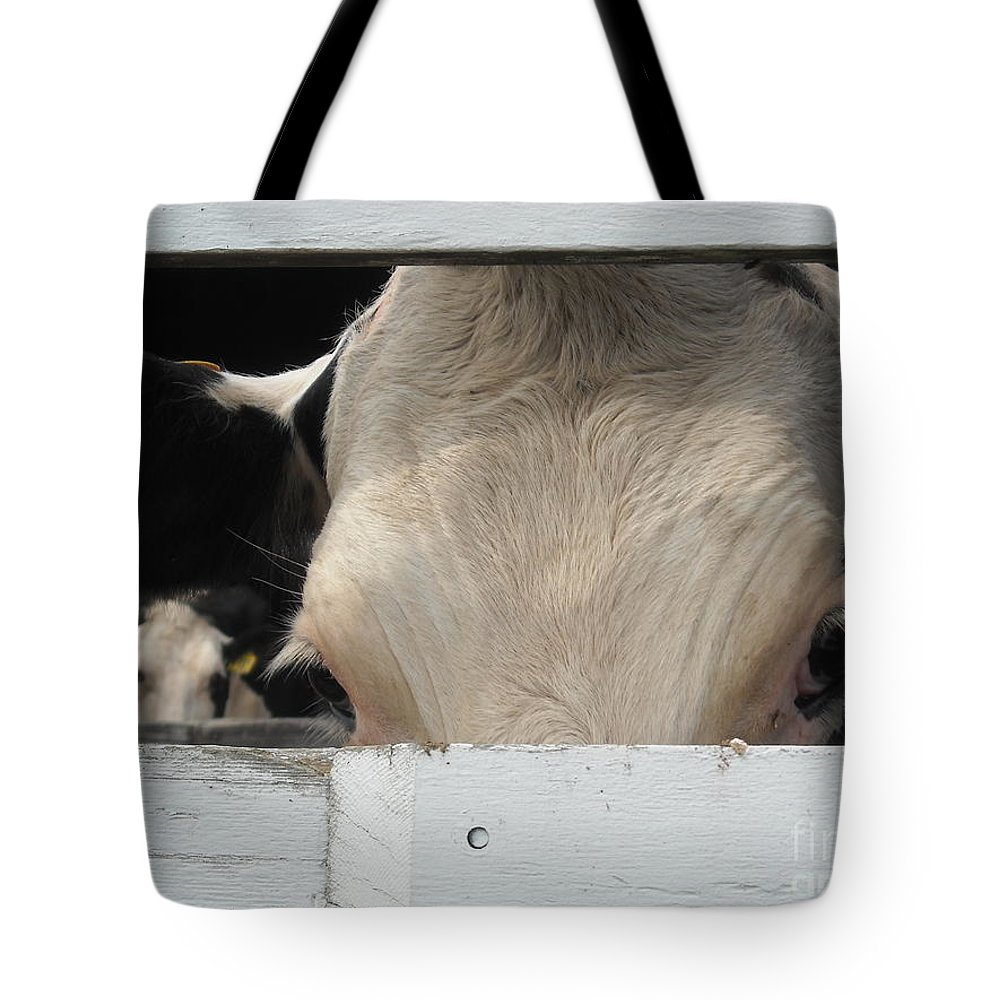 Dairy Cows Tote Bag featuring the photograph Peek-a-boo Cow by Michelle Welles