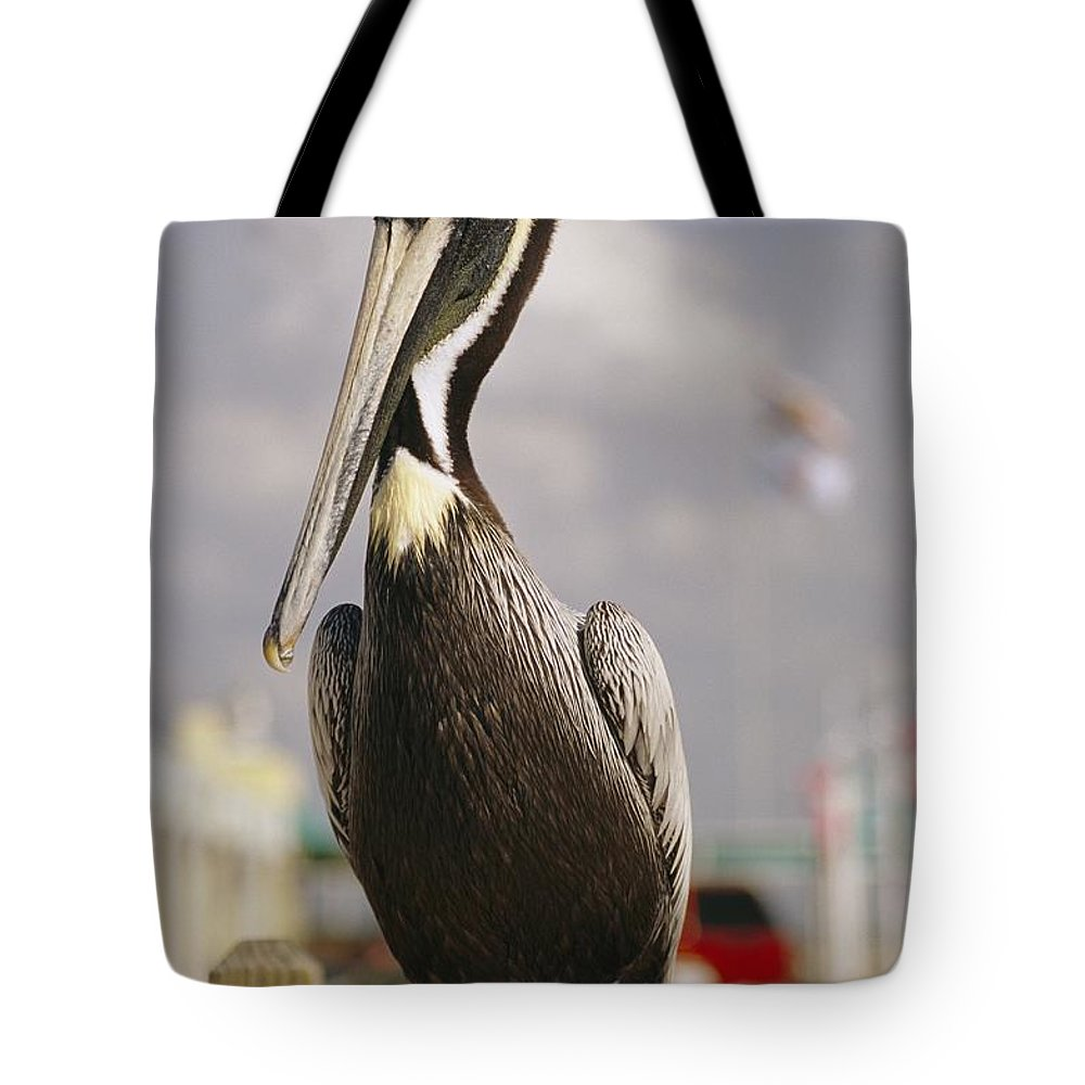 North America Tote Bag featuring the photograph Pelican Visiting City Marina by Richard Nowitz