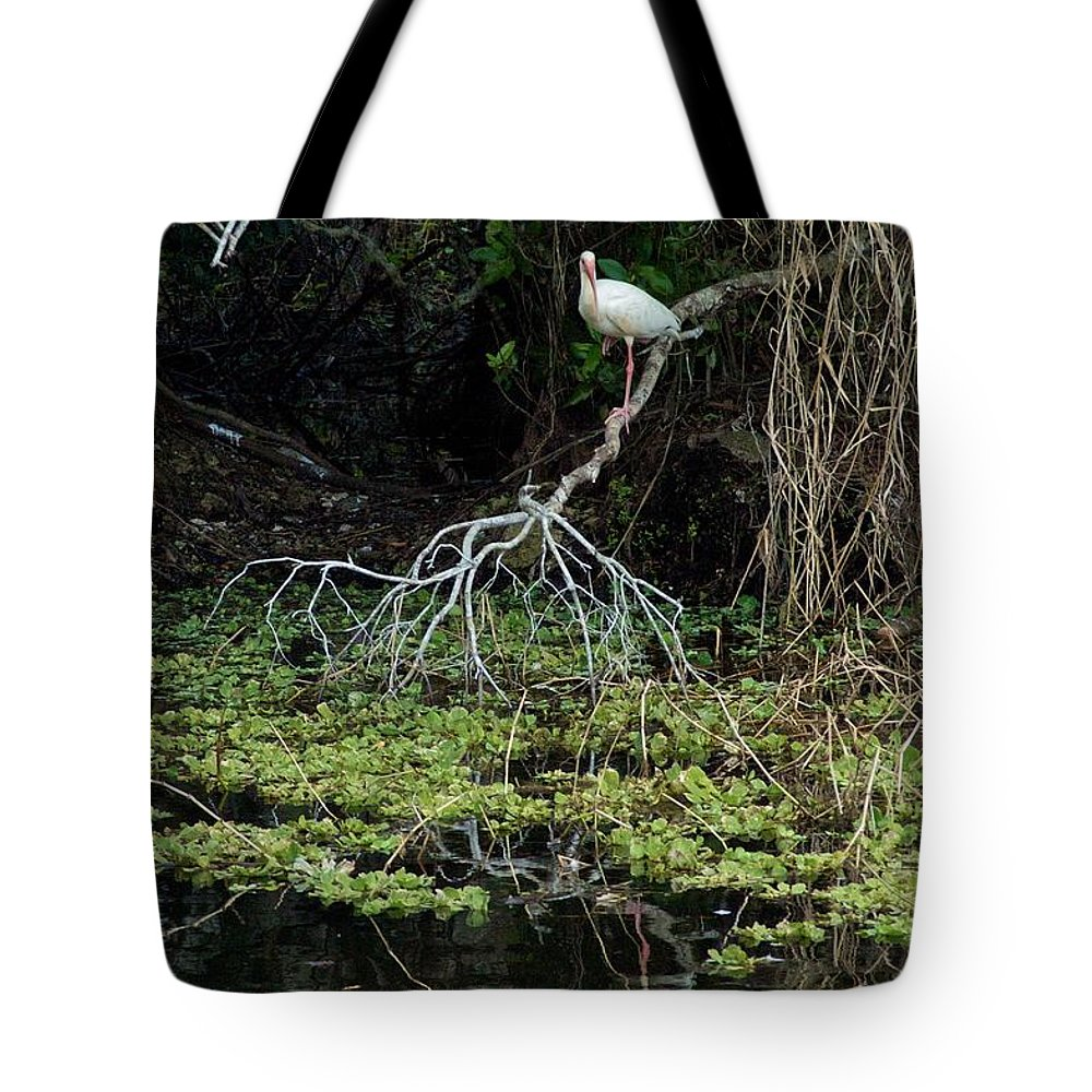 Ave Maria Tote Bag featuring the photograph Perch by Joseph Yarbrough