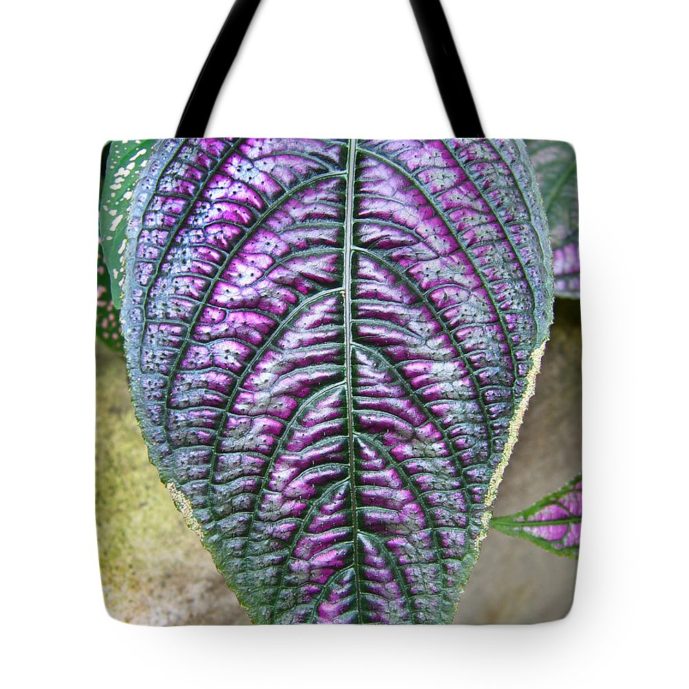 Perisan Plant Tote Bag featuring the photograph Perisan Plant by Denise Keegan Frawley