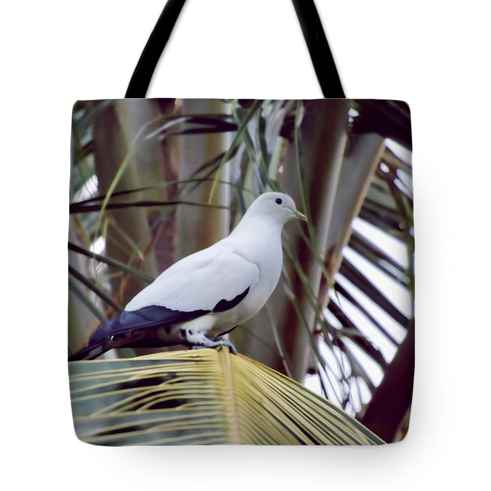 Pied Imperial Pigeon Tote Bag featuring the photograph Pied Imperial Pigeon by Douglas Barnard