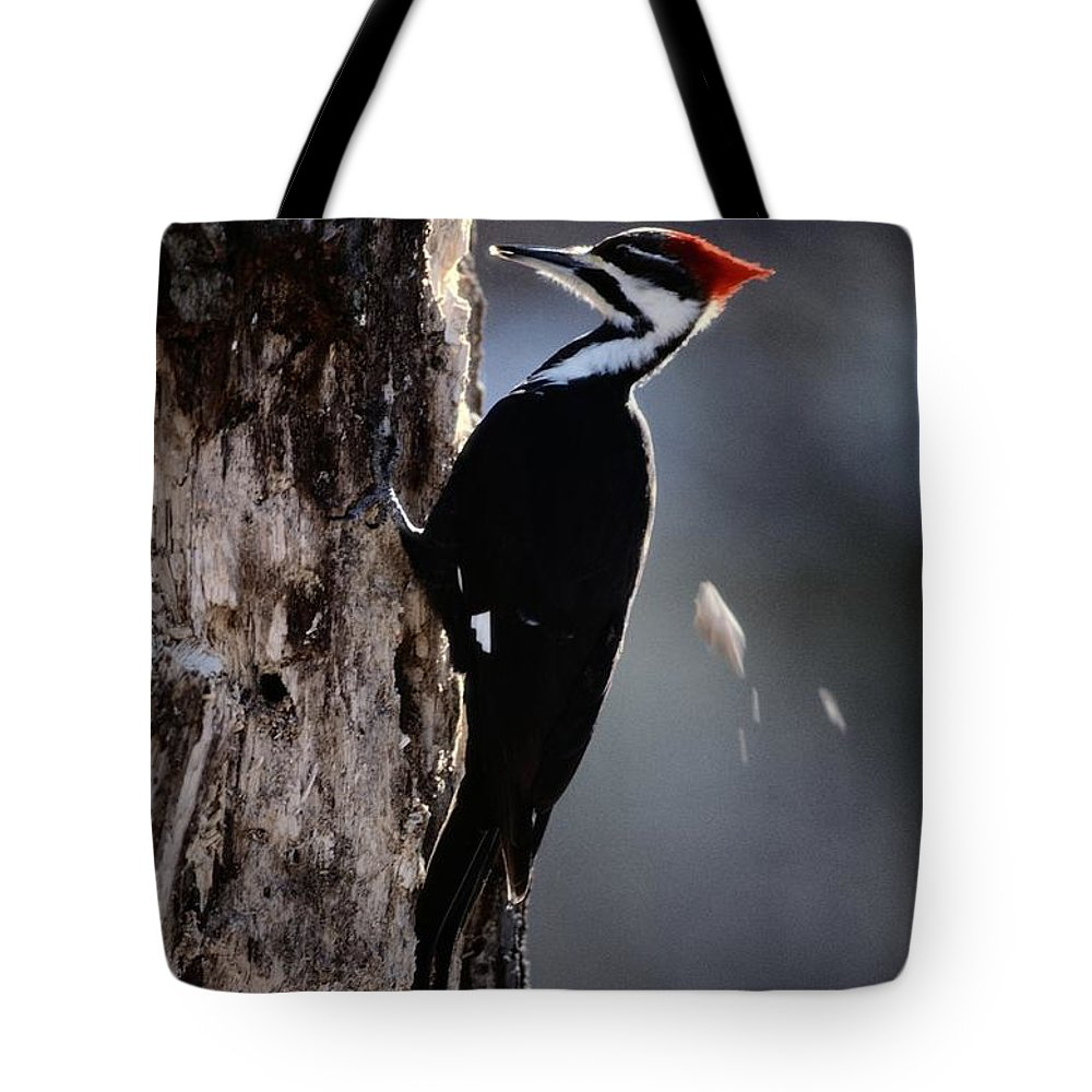 United States Tote Bag featuring the photograph Pileated Woodpecker Dryocopus Pileatus by Bates Littlehales