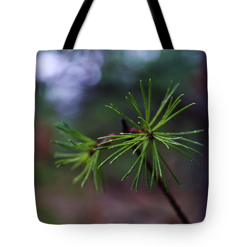 Forest Tote Bag featuring the photograph Pine Tree by Michael Goyberg