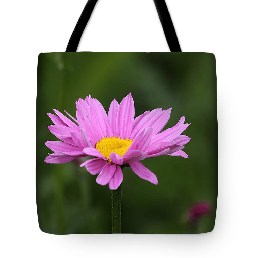 Doug Lloyd Tote Bag featuring the photograph Pink Daisy by Doug Lloyd