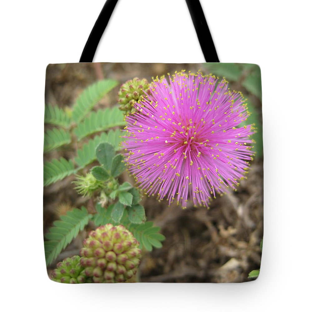 Mimosa Flower Wildflower Texas Pink Spherical Sensitive Plant Tote Bag featuring the photograph Pink Fuzzball by Cindy Clements