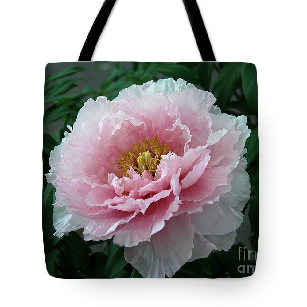 Pink Peony Flower Tote Bag featuring the digital art Pink Peony Flowers Series 2 by Eva Kaufman