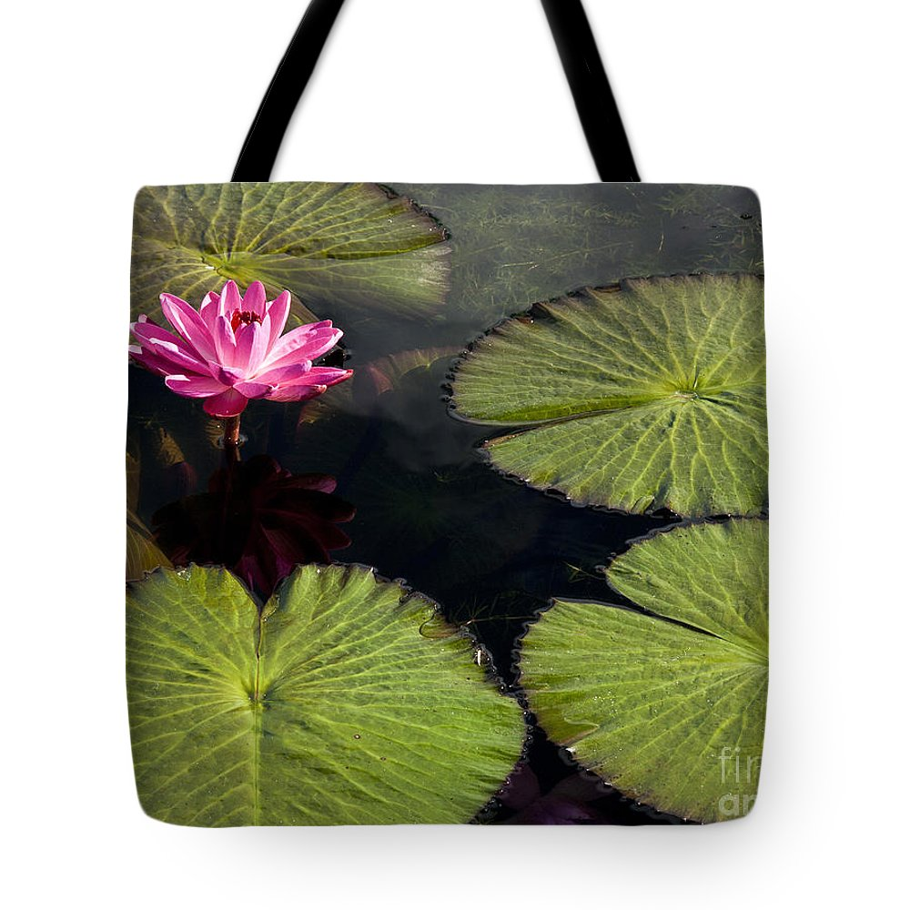 Water Llilies Tote Bag featuring the photograph Pink Water Lily I by Heiko Koehrer-Wagner