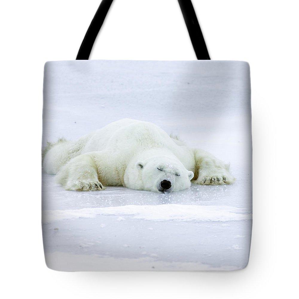 Mp Tote Bag featuring the photograph Polar Bear Ursus Maritimus Resting by Matthias Breiter