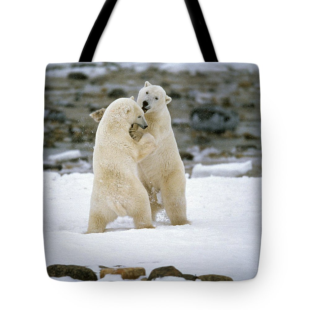Aggressions Tote Bag featuring the photograph Polarbears, Churchill, Manitoba by Mike Grandmailson