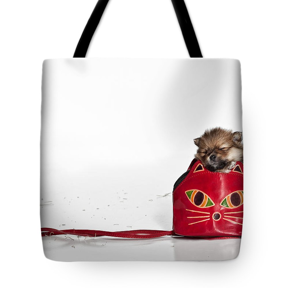 Pomeranian Photographs Tote Bags