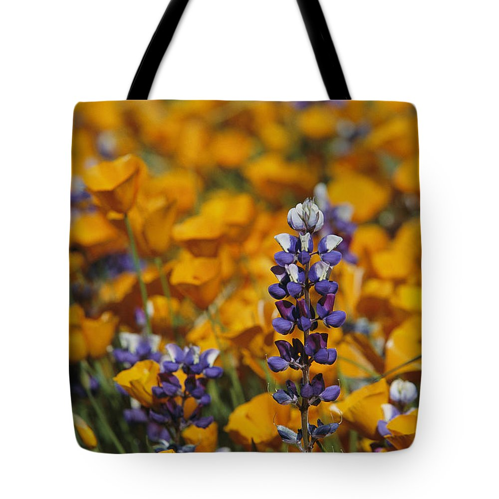 North America Tote Bag featuring the photograph Poppies And Lupine Flowers In A Santa by Marc Moritsch