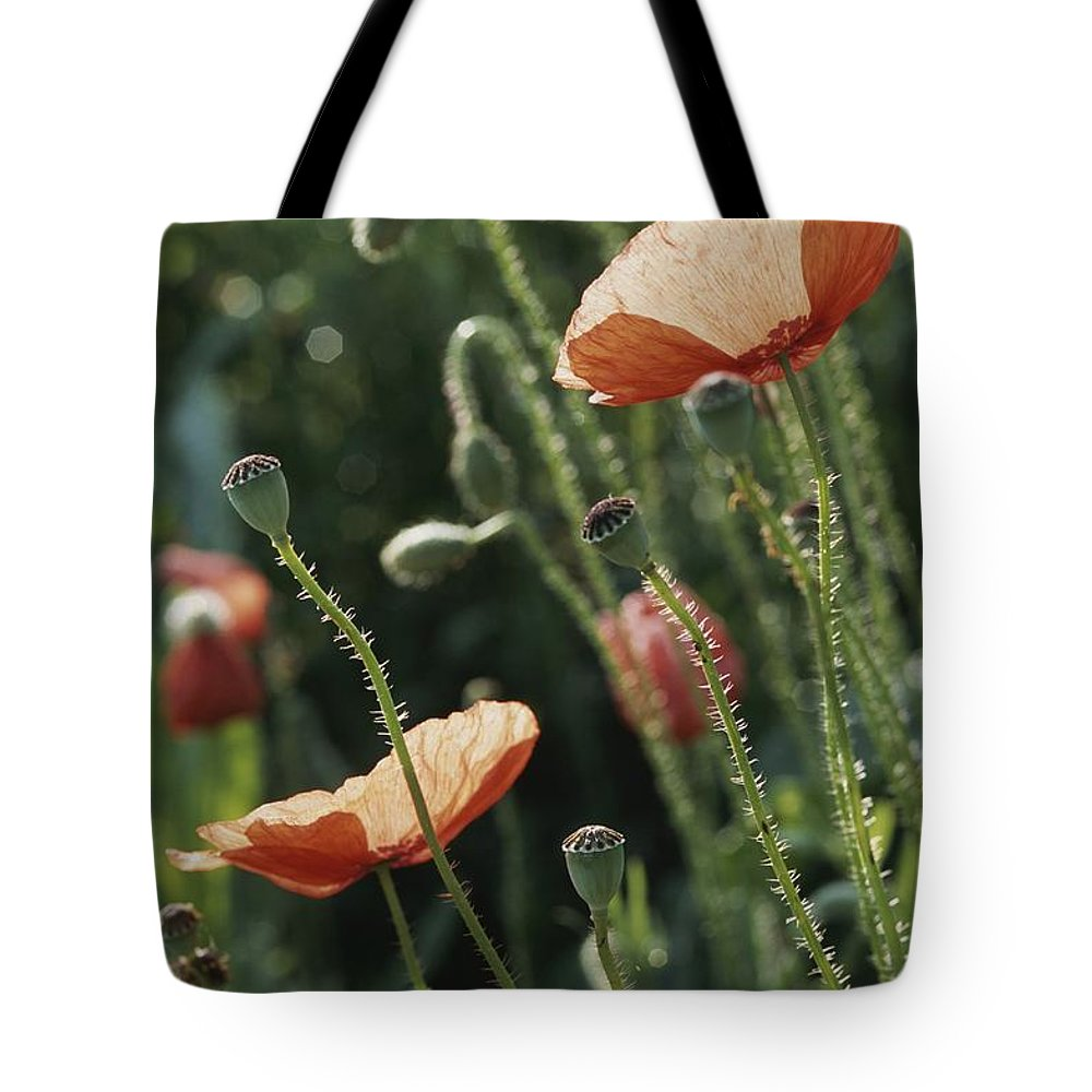 Europe Tote Bag featuring the photograph Poppies In A Field In Provence by Nicole Duplaix
