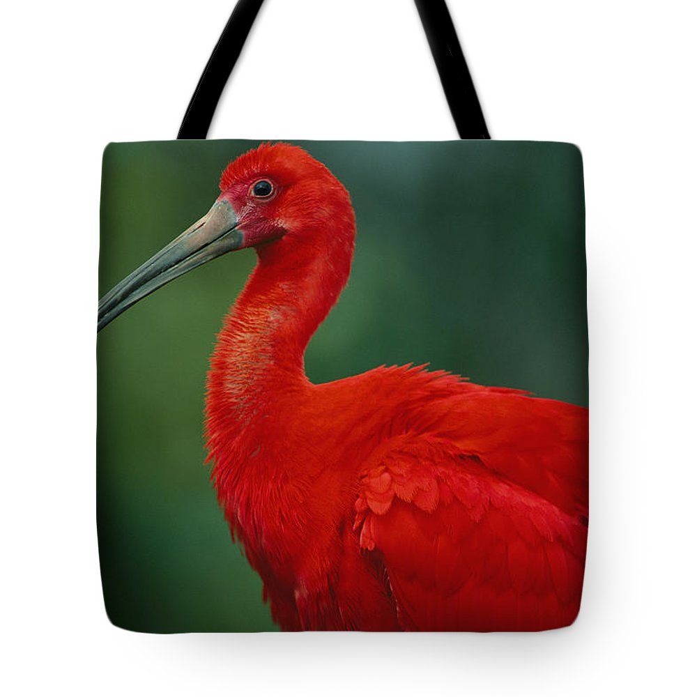 Animals Tote Bag featuring the photograph Portrait Of A Captive Scarlet Ibis by Joel Sartore