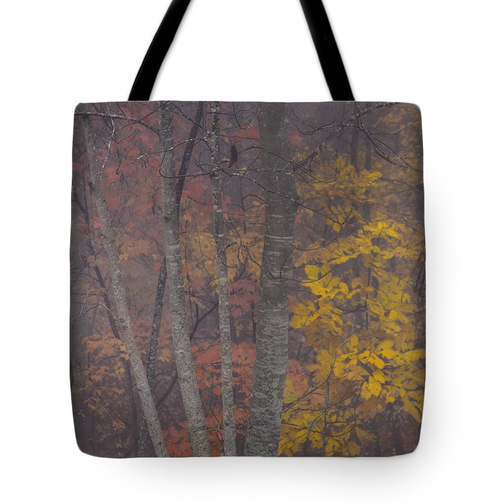 Red Leaves Photographs Tote Bag featuring the photograph Portrait Of Autumn by Rob Travis