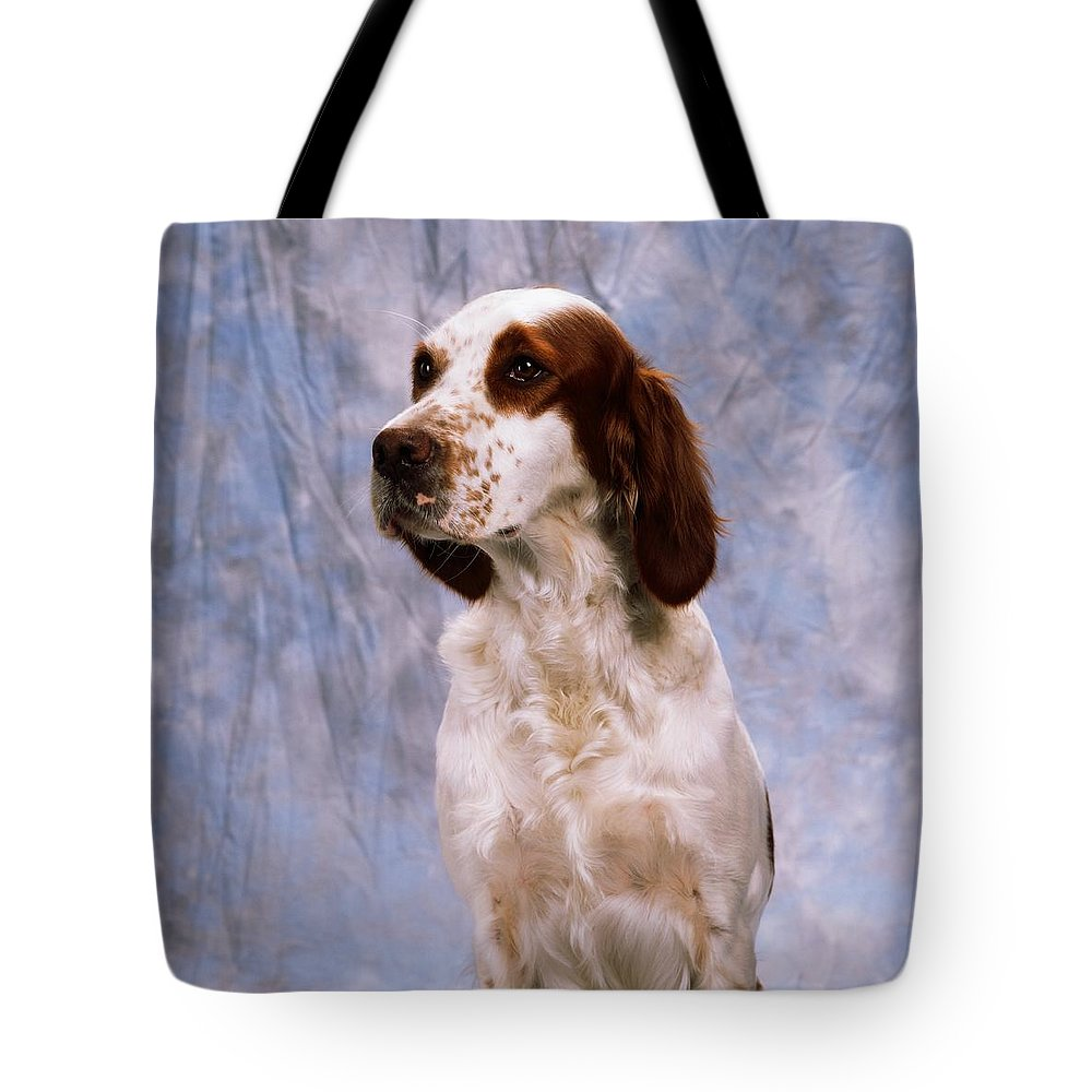 Animals Tote Bag featuring the photograph Portrait Of Irish Red And White Setter by The Irish Image Collection