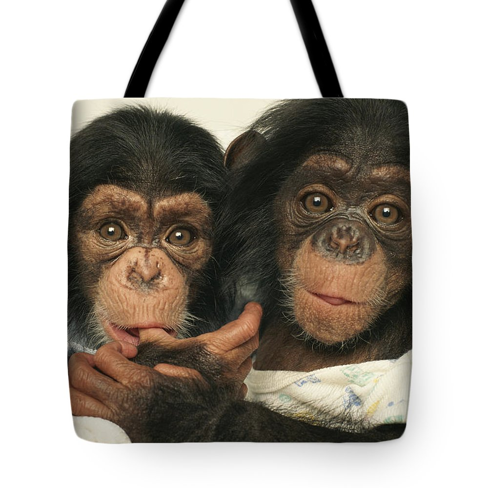 North America Tote Bag featuring the photograph Portrait Of Two Young Laboratory Chimps by Steve Winter