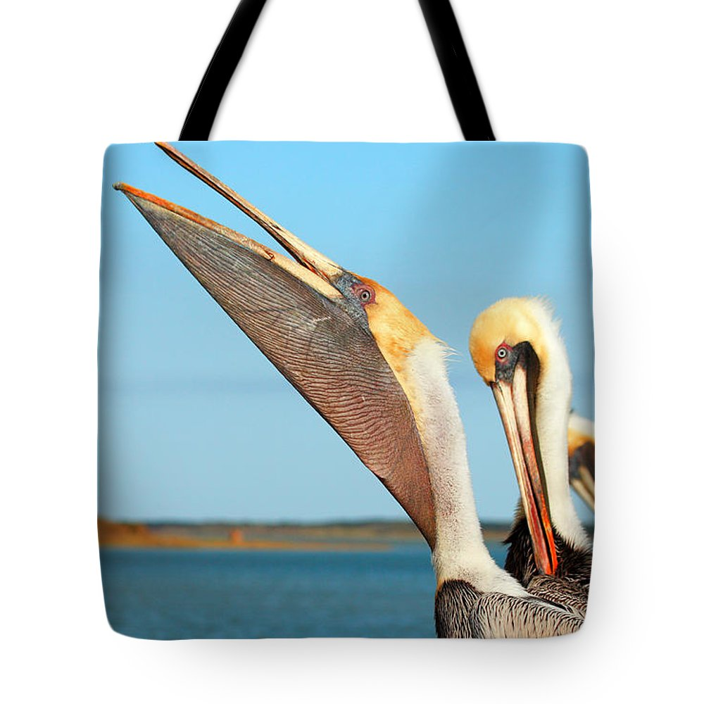 Brown Pelican Tote Bag featuring the photograph Pouch And Preen by Andrew McInnes