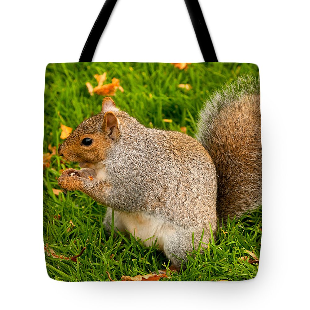 Squirrel Tote Bag featuring the photograph Preparing For Winter by Paul Mangold