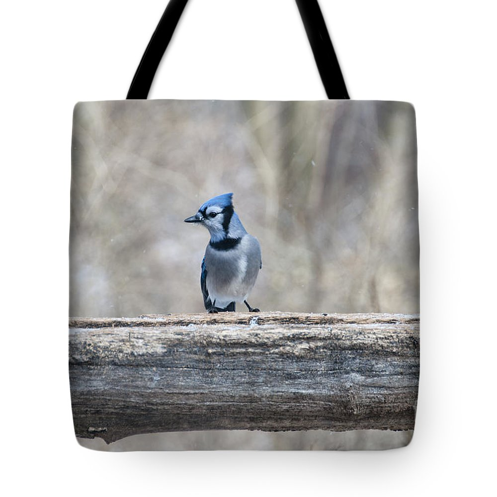 Blue Bird Tote Bag featuring the photograph Pretty Boy by David Arment