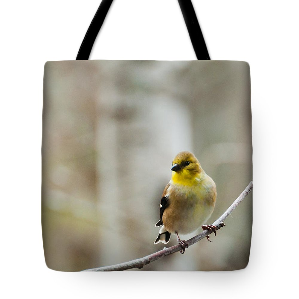 Finch Tote Bag featuring the photograph Pretty Finch by Cheryl Baxter