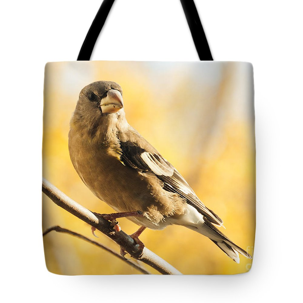 Grosbeak Tote Bag featuring the photograph Pretty In Yellow by Cheryl Baxter