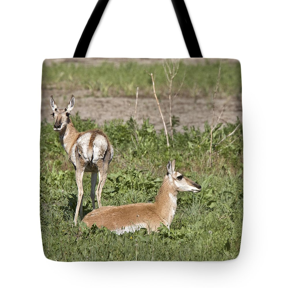 Pronghorn Tote Bag featuring the photograph Pronghorn Antelope With Young by Mark Duffy