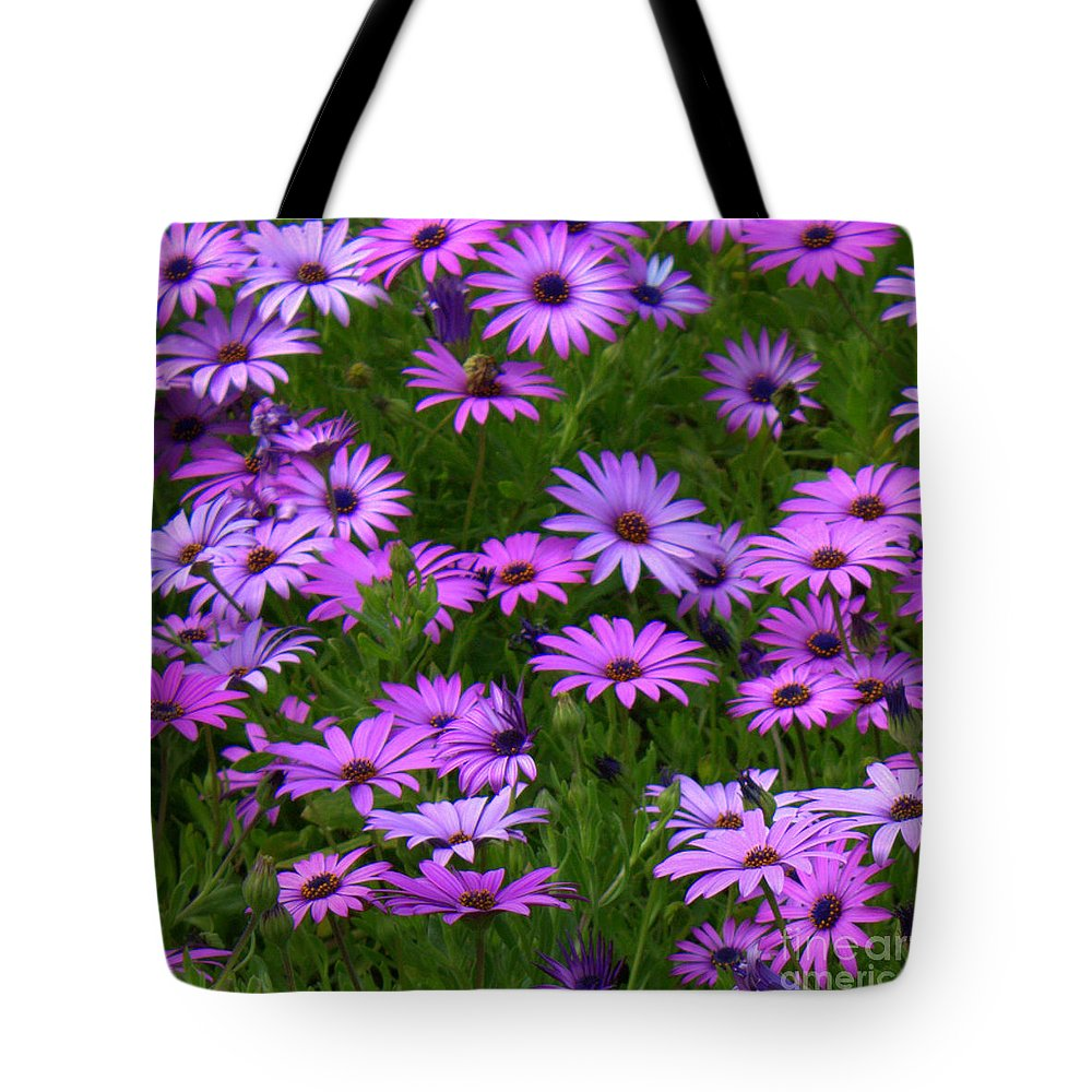 Purple Daisies Tote Bag featuring the photograph Purple Daisies Square by Carol Groenen