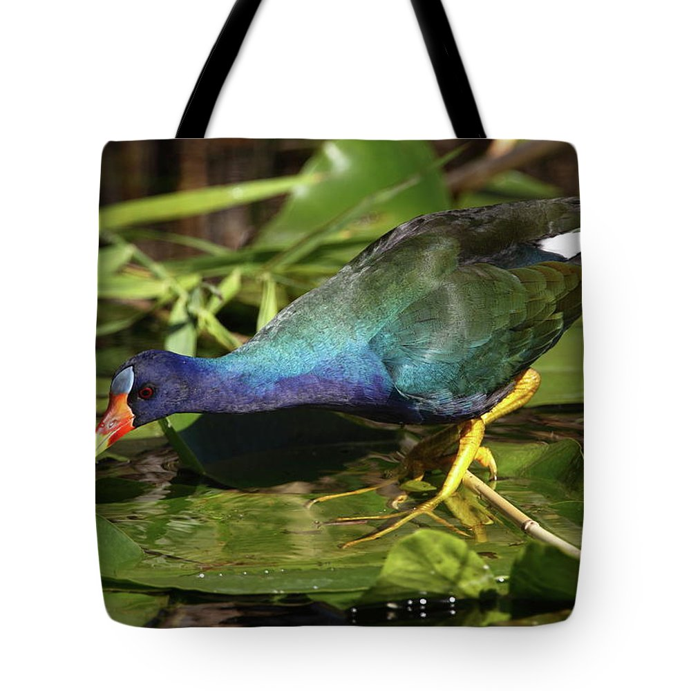 Tote Bag featuring the photograph Purple Gallinule by Bruce J Robinson
